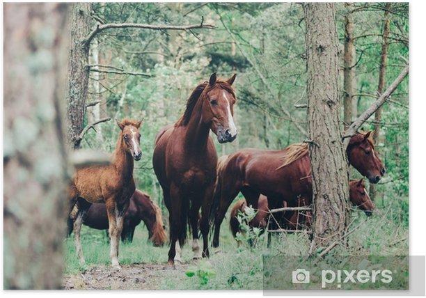Plakat Stado brązowych koni chodzących w zielonym lesie. - Zwierzęta
