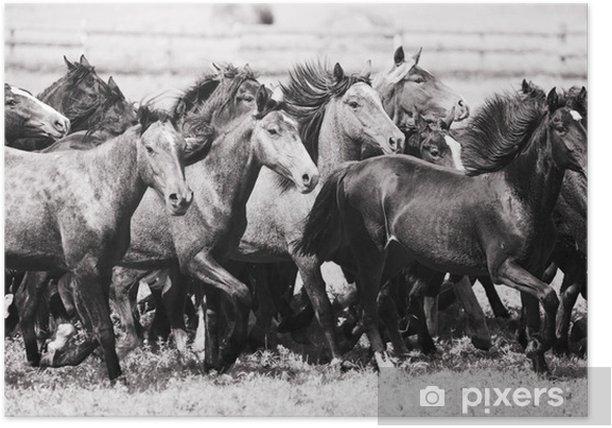 Plakat Stado młodych koni - Ssaki