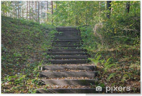 Plakat Stare drewniane schody w lesie - Budynki prywatne