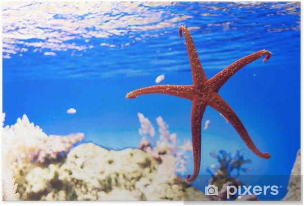 Plakat Starfish na niebieskim tle - Zwierzęta żyjące pod wodą