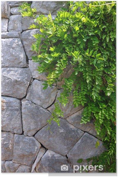 Plakat Stary mur i roślin pnącze Green - pionowe zdjęcie. - Rośliny