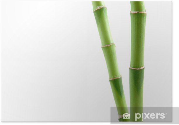 Plakát Šťastný bambus stonky - Rostliny