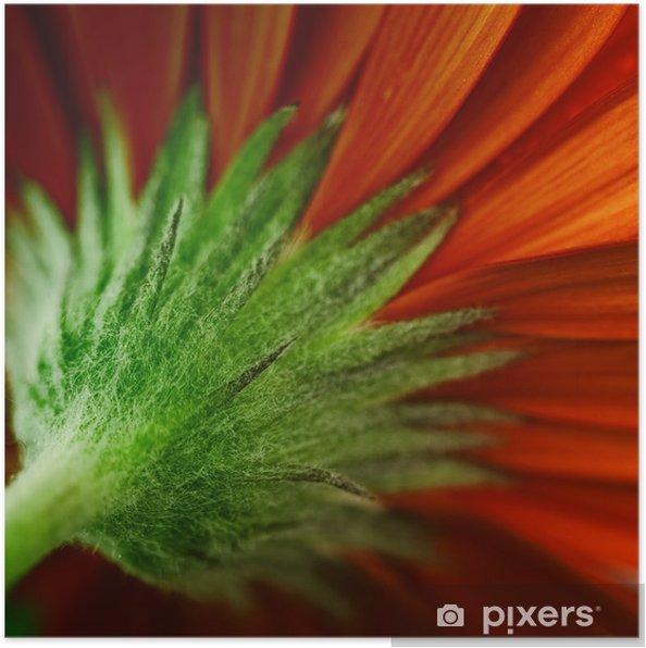Plakat Stokrotka - Kwiaty