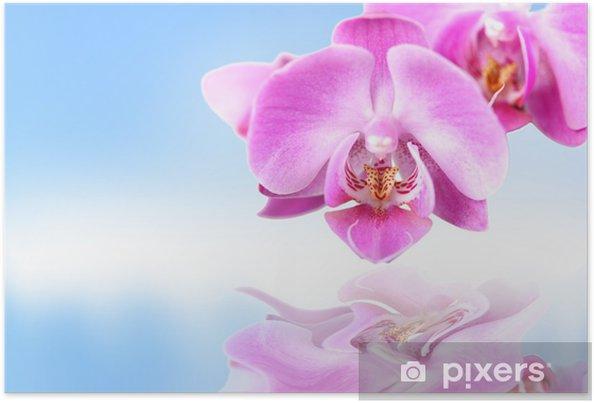 Plakát Storczyk, fioletowy, na błękitnym tle z odbiciem w Wodzie. - Květiny