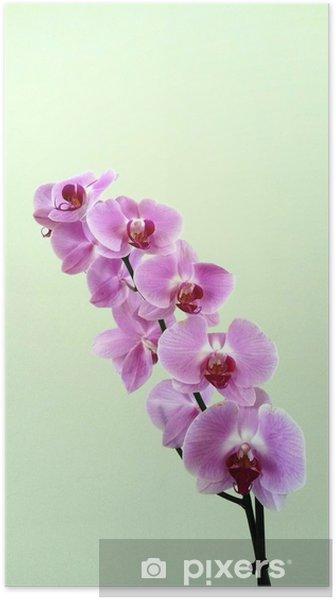 Plakat Storczyki - Kwiaty