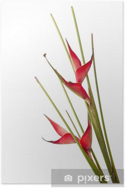 Plakat Strelicja - Kwiaty