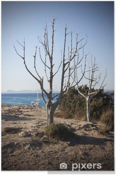 Plakát Stromy na moře - Prázdniny