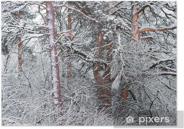 Plakát Stromy ve sněhu - Roční období