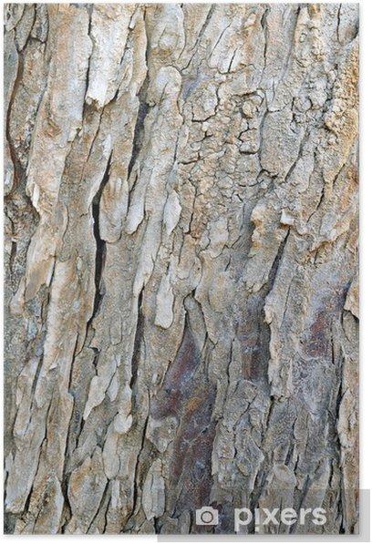 Plakat Struktura drewna - Rolnictwo