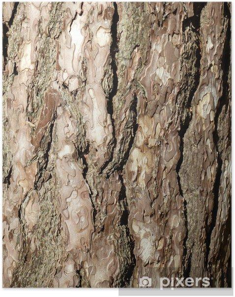 Plakat Struktura kora - Tekstury