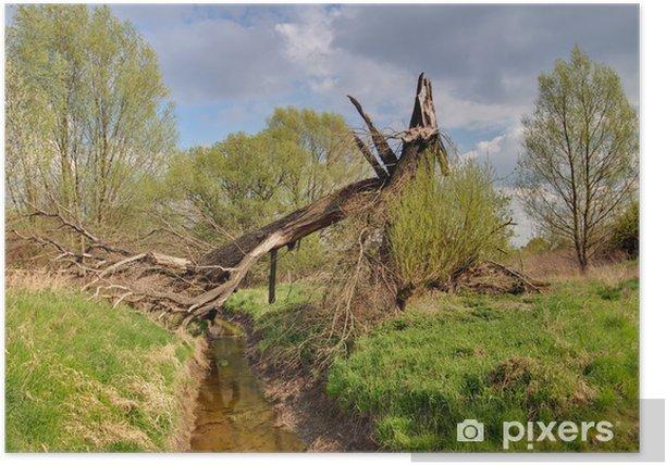 Plakát Sturmschaden - Přírodní katastrofy
