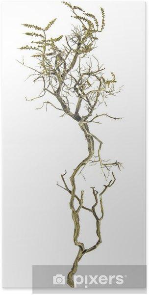 Plakát Suché větve - Stromy