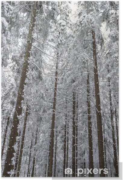 Plakat Świerk w śniegu lesie - Pory roku