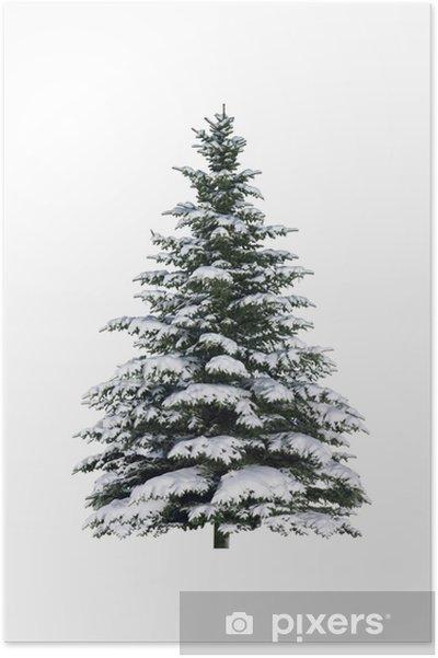 Plakat Świerk w śniegu - Święta międzynarodowe
