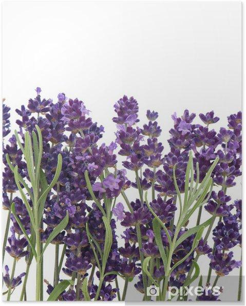 Plakat Świeże kwiaty lawendy i liście - Kwiaty
