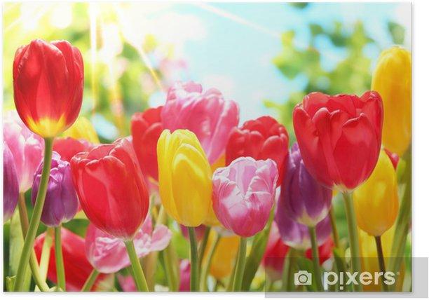 Plakat Świeże tulipany w ciepłe światło słoneczne - Tematy