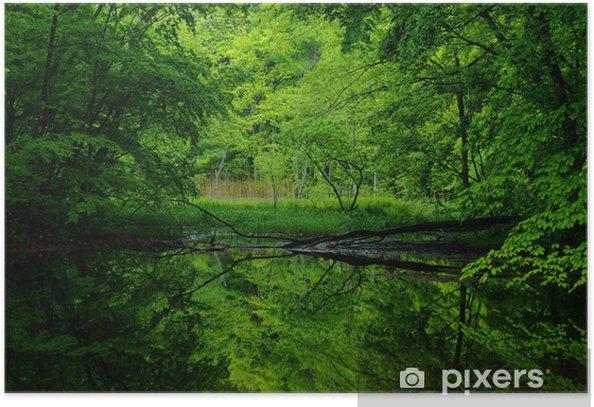 Plakat Świeże zielone odbicie w bagnie - Przyroda