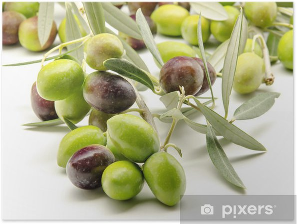 Plakat Świeżo zebrane oliwki - Oliwki