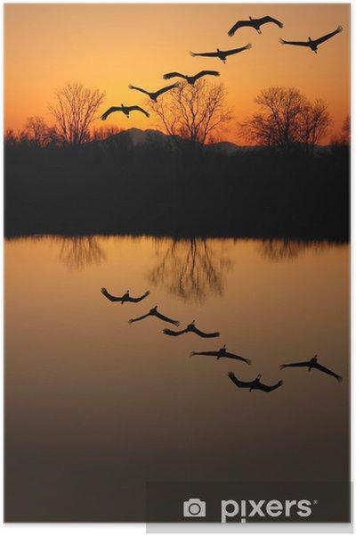 Plakat Sylwetka zagrożonych żurawi sandhill, odbicie - Ptaki