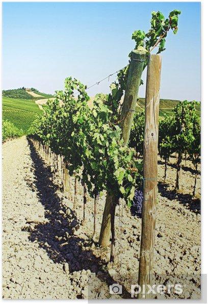 Plakat Szczegół winnicy wzgórzu na wsi jesienią - Europa