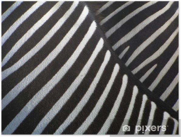 Plakat Szczegóły zebra - Zebry