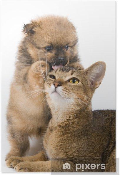 Plakat Szczeniak z Spitz-pies z kotem - Ssaki