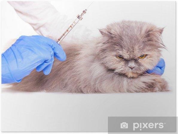 Plakat Szczepienia Dla Zwierząt W Klinice Weterynaryjnej