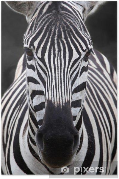 Plakat Szef zebra - Tematy