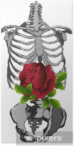 Plakat Szkielet i róża - Części ciała