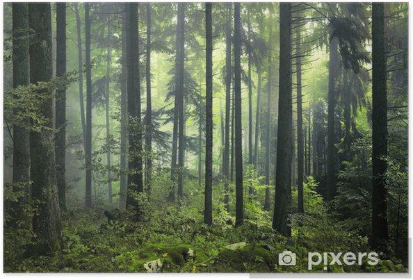 Plakat Tajemniczy ciemny las - Style