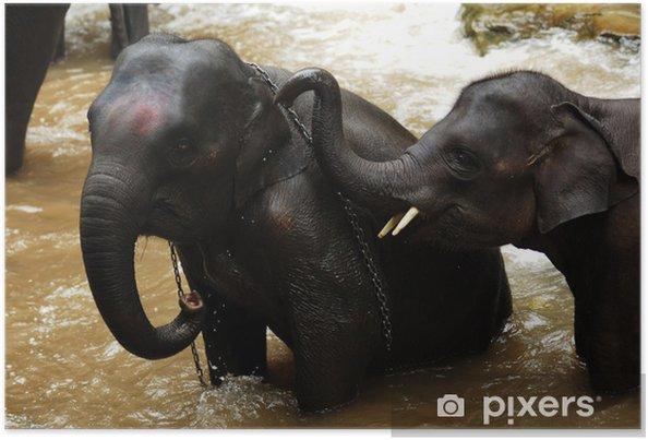 Plakat Tajlandia, Chiang Mai: kąpiel słonia - Azja