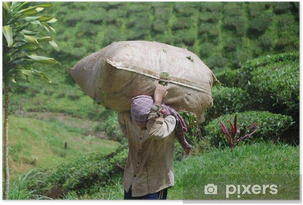 Plakat Tea Holder - Rolnictwo