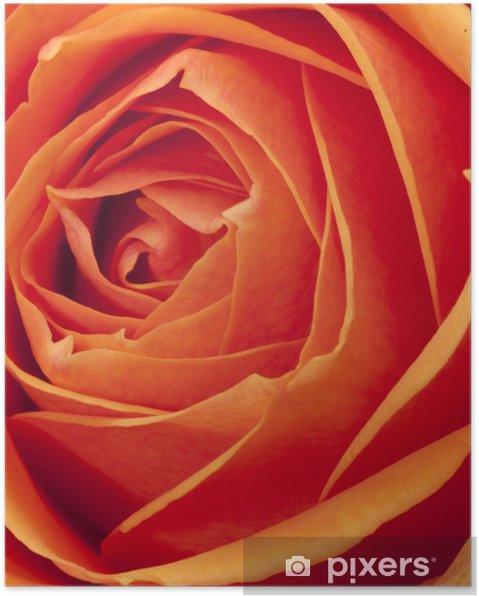 Plakat Tea Rose - Świętowanie