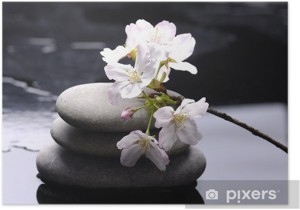 Plakát Terapie kameny s bílou květinu - Přírodní krásy