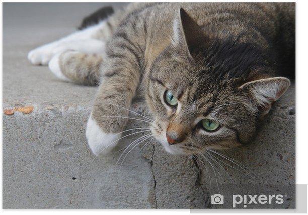 Plakát Tigerkatze auf Treppenstufe - Témata