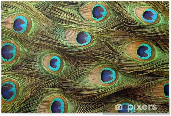Plakat Tło Feather Peacock - Tła