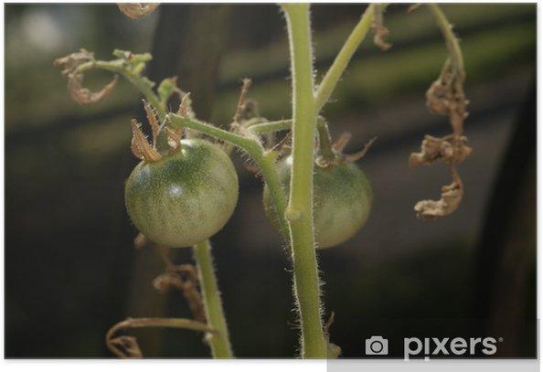 Plakát Tomates Vertes - Domov a zahrada