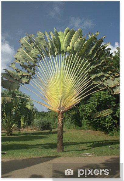 Plakat Traveller Palm - Ameryka