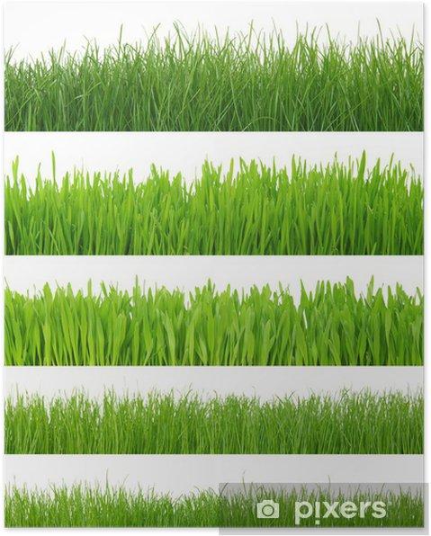 Plakát Trávy na bílém - Rostliny