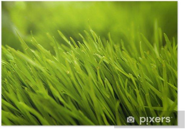 Plakat Trawa - Przeznaczenia