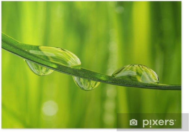 Plakat Trawy z kroplami wody - szczegóły - Rośliny