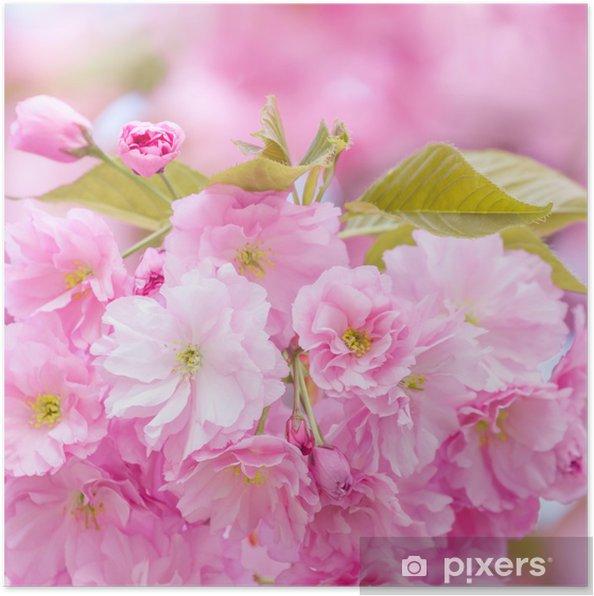 Plakát Třešně květ strom - Roční období