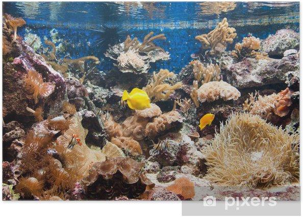 Plakat Tropical Aquarium - koral - Zwierzęta żyjące pod wodą