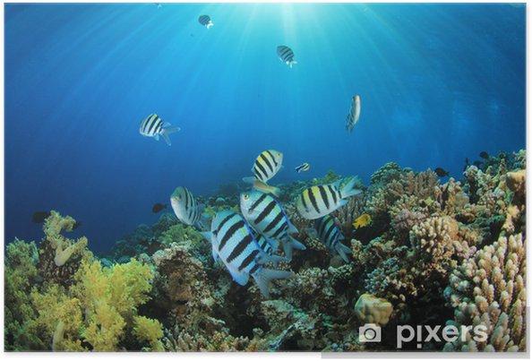 Plakat Tropical Fish i Coral Reef w słońcu - Zwierzęta żyjące pod wodą