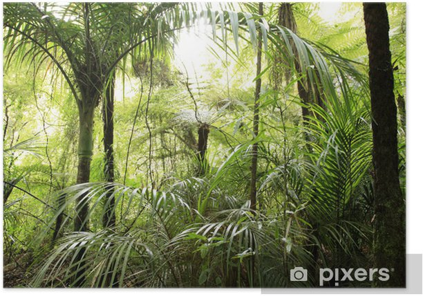 Plakát Tropical forest - Témata
