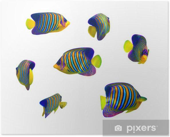 Plakat Tropical kolekcja ryb na białym tle - Zwierzęta żyjące pod wodą