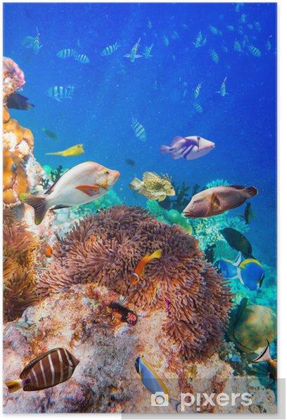 Plakat Tropikalna rafa koralowa. - Rafa koralowa