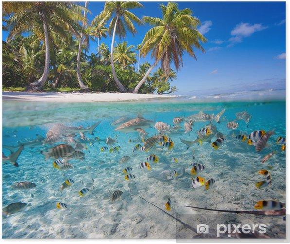 Plakat Tropikalna wyspa - Ryby