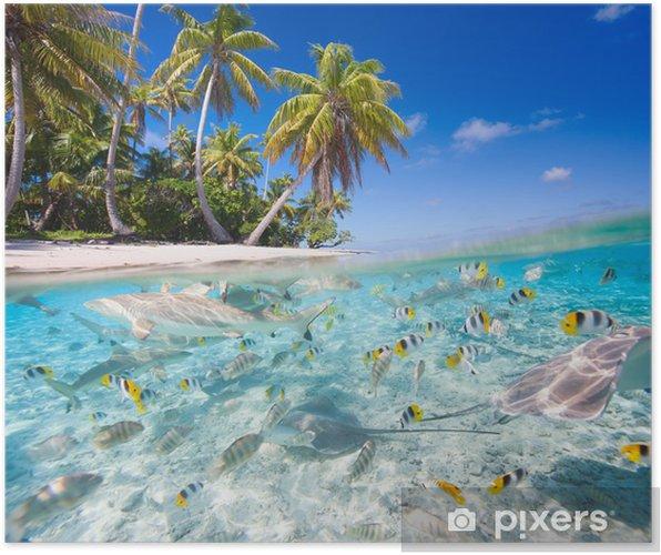 Plakat Tropikalna wyspa - Tematy