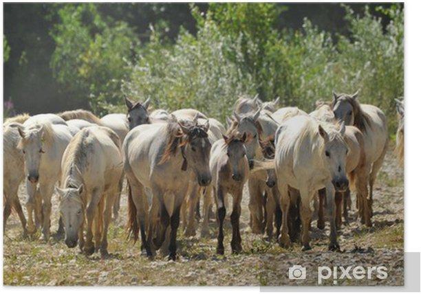 Plakat Troupeau de chevaux camargues - Ssaki